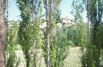Fotografie, Sommer landschaft, Baum, Berge