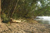 Fotografie, Baum, Wasser, Ufer