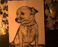 Kohlezeichnung hund, Zeichnungen, Kohlezeichnungen, Kohlezeichnung