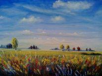 Landschaft, Wiese, Himmel, Feld