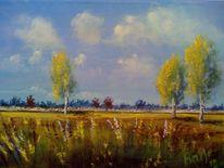 Natur, Nachmittagssonne, Birken, Wiese