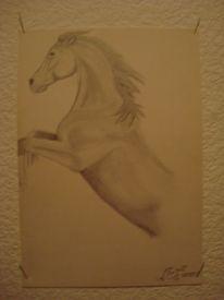 Pferde, Mustang, Hengst, Zeichnungen