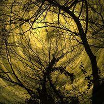 Fotografie, Äste, Zweig, Digital
