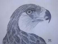 Greifvogel, Tiere, Vogel, Affenadler