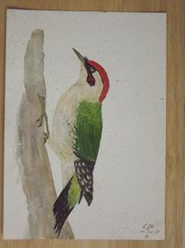 Tiere, Specht, Aquarellmalerei, Vogel