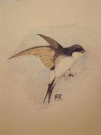 Singvogel, Vogel, Mehlschwalbe, Schwalbe