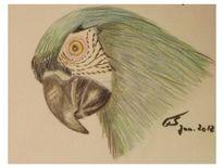 Zeichnung, Buntstiftzeichnung, Skizze, Papagei