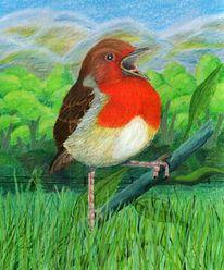 Vogel, Singvogel, Rotkehlchen, Zeichnungen