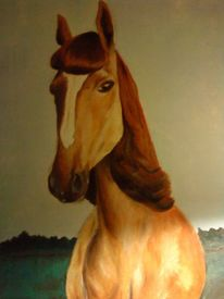 Tiere, Frisur, Portrait, Pferde