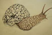 Schnecke, Tusche, Gehirn, Zeichnung