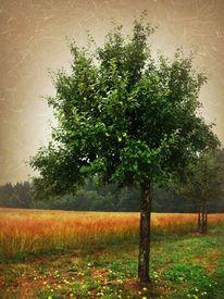 Grün, Landschaft, Gelb, Apfel