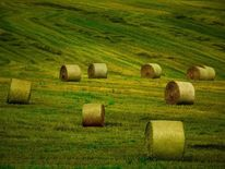 Grüne gras, Stroh, Landschaft, Balen