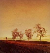 Abstrakt, Birken, Baum, Abendstimmung