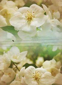 Blumen, Frühling, Vogel, Weiß