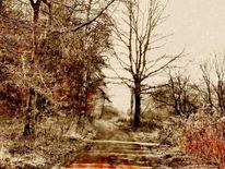 Baum, Weg, Kalt, Winterlandschaft