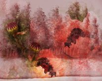 Mohn, Wald, Farben, Baum