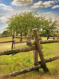 Dorf, Wiese, Obst garten, Landschaft