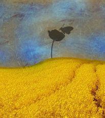 Schatten, Feld, Landschaft, Blau
