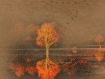 Wasser, Farben, Spiegelung, Baum