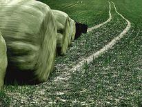 Feld, Balen, Spüren, Gras