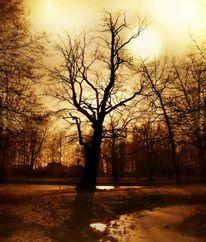 Winter, Licht, Mond, Baum