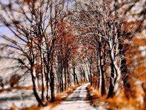 Winterlandschaft, Weg, Schnee, Baum