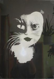 Katze, Gesicht, Portrait, Schwarz weiß
