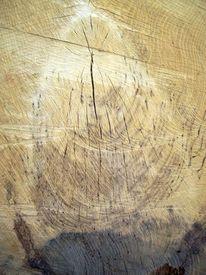 Baum, Blaufäulnis, Struktur, Mit blaufäulnis
