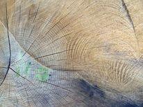 Mit blaufäulnis, Gefällte, Struktur, Baum