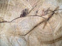 Modern, Gefällte, Baum, Struktur