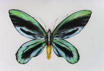 Gelb, Grün, Bleistiftzeichnung, Schmetterling