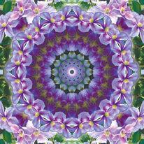 Clematis, Blumen, Fotografie, Mandala