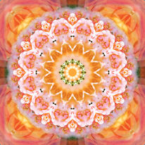 Mandala, Blumen, Rose, Digitale kunst