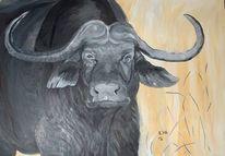Tiere, Energie, Portrait, Afrika