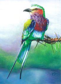 Gabelracke, Vogel, Singvogel, Phönix