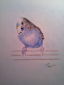 Wellensittich, Zeichnungen, Zeichnung, Tiere
