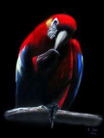 Papagei, Bunt, Malerei, Vogel