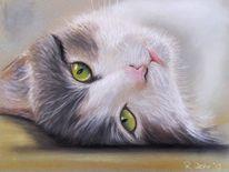 Katzenaugen, Augen, Blick, Portrait