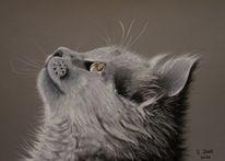 Katze, Tierzeichnung, Katzenportrait, Katzenaugen