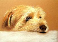 Pastellmalerei, Hundeportrait, Portrait, Tiere