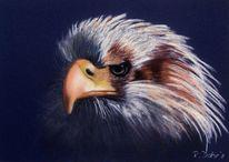 Seeadler, Tiere, Adler, Pastellmalerei