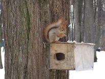 Eichhörnchen, Fotografie