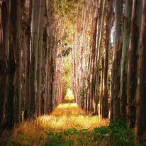 Sonne, Natur, Grün, Baum