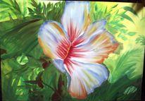 Blüte, Pflanzen, Hibiskus, Blumen