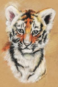 Tiere, Portrait, Zeichnungen, Tiger
