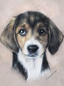 Hundeportrait, Zeichnungen, Tiere, Hund