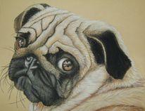 Hund, Hundeblick, Mops, Malerei