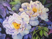 Pfingtsrosen, Aquarell, Pflanzen, Blumen