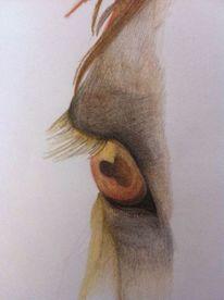 Buntstiftzeichnung, Natur, Augen, Pferde
