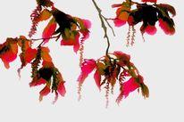 Grün, Blätter, Rot, Zweig